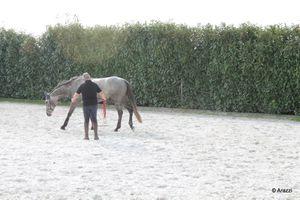 """Question à Yves Katz, participant """"piéton"""" aux secondes rencontres d'Equitation de Tradition Française"""