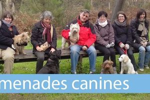 Education canine à Pessac (33)