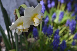 Le jardin à Pâques