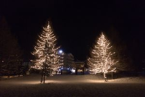 Fir trees in lights