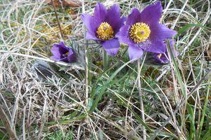 Balade de printemps sur les pelouses calcaires en Lorraine !