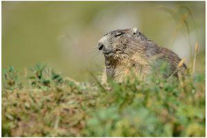 petite suite chez les marmottes