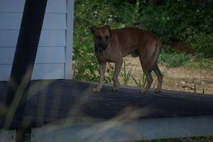 Chiens errants SOFAIA - Avez-vous perdu votre chien ?