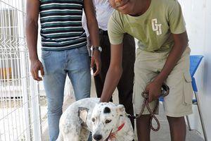 DOTTY - femelle croisée dalmatien - 1 an - adoptée