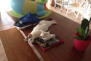GALACK - mâle blanc - 5 mois - adopté