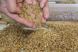 Controversias por la ley de semillas
