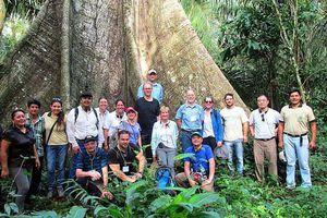 El reto en la gestión de los bosques