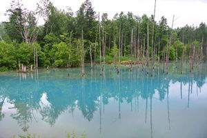 Hokkaïdo : Biei : L'étang bleu (青い池 Aoi Iké) et la cascade de Shirahigé (白髭の滝)
