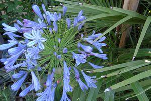 Mon jardin bleu ......