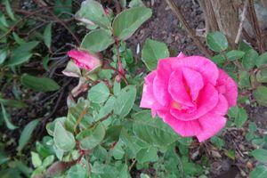 Ma passion :mon jardin ....