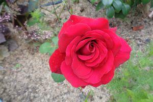 Le jardin Le Clos fleuri en juillet