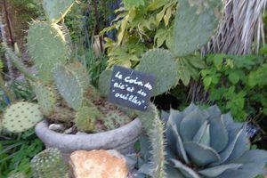 plantes chameaux