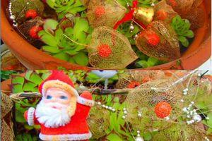 Les Barjo Blogueuses fêtent Noël {et mon Swap Barjo}