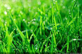 Comment se débarrasser des mauvaises herbes