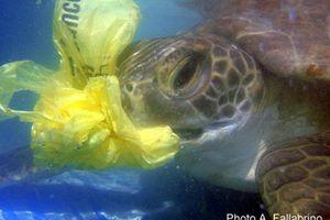 Les sacs plastique : un réel danger pour la faune et la flore marine