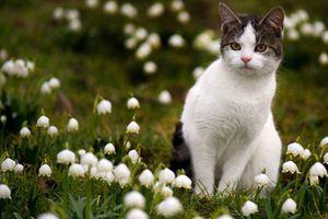 Le muguet, une plante aussi jolie que dangereuse pour vos animaux