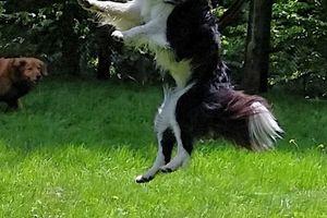 Le sport canin en été : des règles simples pour savoir s'il fait trop chaud pour votre chien