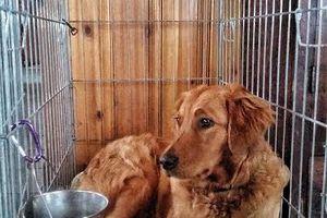 La cage....la maison de votre chien!