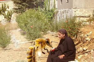 بين الراهبة والنحلة