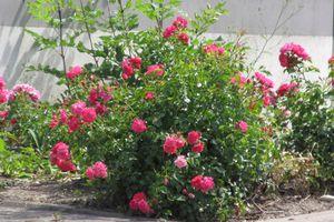 Blumenzeit