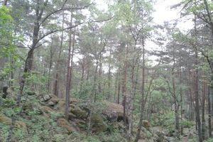 Forêt de Fontainebleau et Barbizon