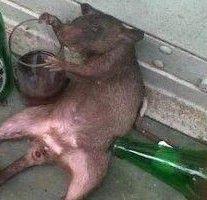 La souris alcoolique