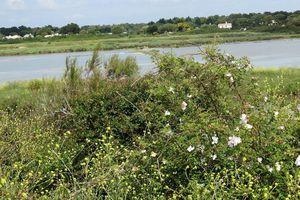 Les oiseaux du marais de Mullembourg à Noirmoutier - Vendée
