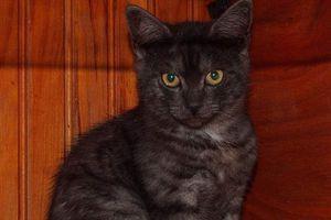 6 chatons sont à réserver :-)