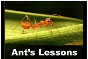 Ant's lessons