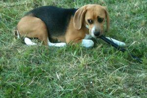 Beagle... vous avez dit Beagle ?