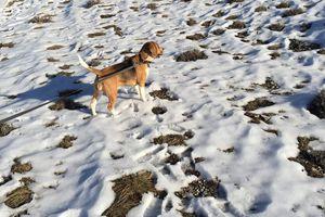 Beagle en images, dans tous ses états