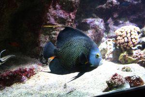 Aquarium à la Guadeloupe