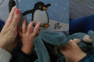 Où est mon pinguin - Usborne