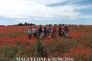 MAGUELONE le 02/06/2016