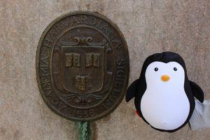 Le Pingouin à Boston !!