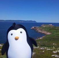 Le Pingouin au Cap Breton !!