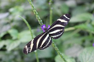 Les Chutes du Niagara : Butterfly Conservatory