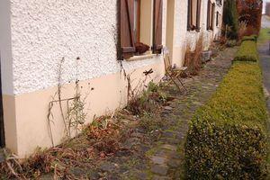 Nettoyage des plantations devant la maison : un petit air de Sud
