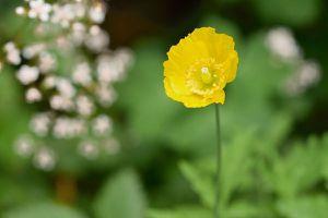 30-05-2017-Aide-mémoire des floraisons
