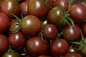 La tomate-cerise black cherry est la plus belle, la plus fidèle, la plus délicieuse