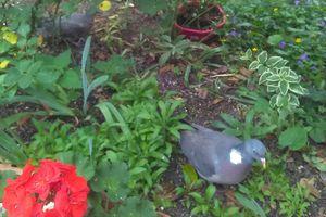 Les visiteurs du jardinet de Dominique