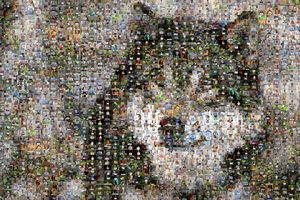 1 000 photos contre l'abattage des loups