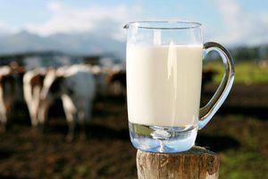 Lait de vache: liste des maladies liées à sa consommation.