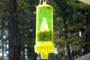 Natural Yellow Jacket Traps – An Insight
