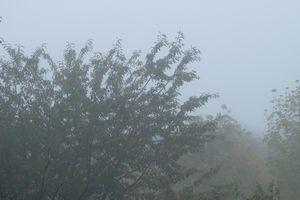 Merveilleux brouillard