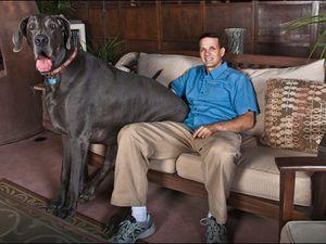 Les 10 photos de chien les plus marrantes du web