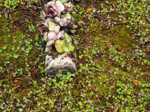 Envahies par les mousses et les herbes (les plus belles)
