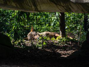 Les loups tranquilles :)