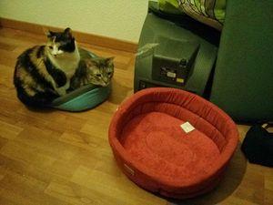 C'est la journée mondiale du chat !