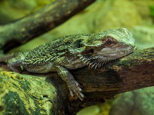 Ballade au zoo de La Barben